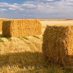 Hay-Bales-square