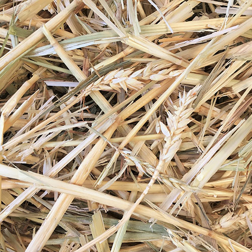 V-Wheaten-Hay